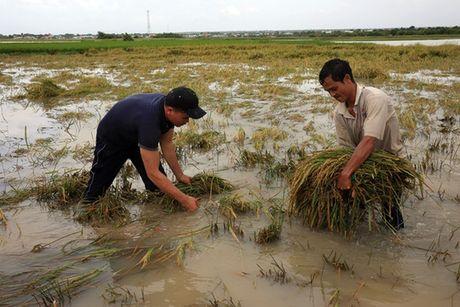 Ninh Thuan van dang mua lon, du bao lu se du doi - Anh 4