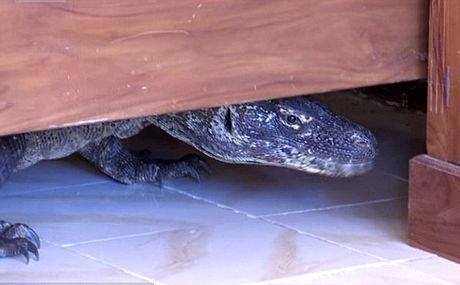 Lanh gay phat hien rong Komodo trong nha tam - Anh 1