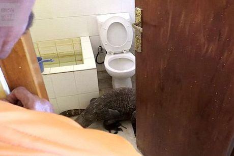 Lanh gay phat hien rong Komodo trong nha tam - Anh 2