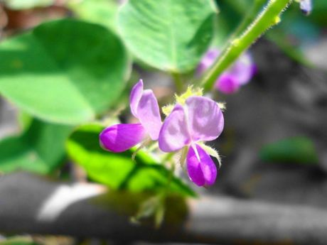 Tac dung chua benh cuc bat ngo cua hoa quynh - Anh 8