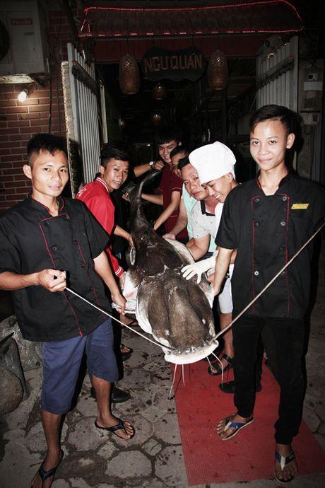 'Thuy quai' song Me Kong van chuyen bang may bay ve HN - Anh 2