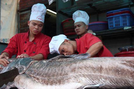 'Thuy quai' song Me Kong van chuyen bang may bay ve HN - Anh 6