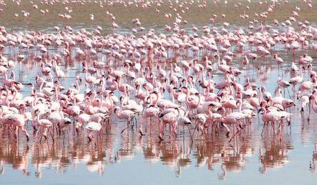 Namibia, tieng goi noi hoang da - Anh 11