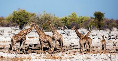 Namibia, tieng goi noi hoang da - Anh 13