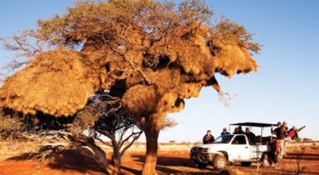Namibia, tieng goi noi hoang da - Anh 1