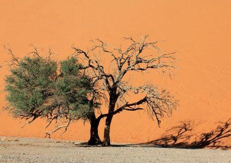 Namibia, tieng goi noi hoang da - Anh 2
