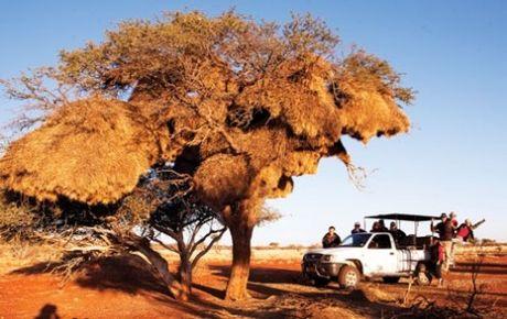 Namibia, tieng goi noi hoang da - Anh 6