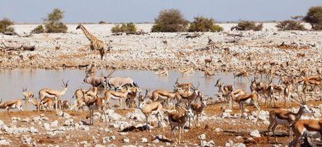 Namibia, tieng goi noi hoang da - Anh 7