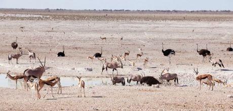 Namibia, tieng goi noi hoang da - Anh 9