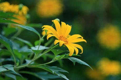 Len nui Ba Vi thuong hoa da quy - Anh 14