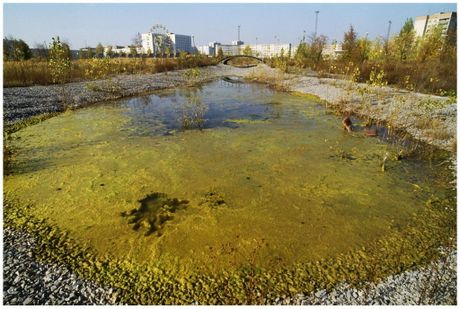 Anh quan long: Chernobyl 4 nam sau tham hoa hat nhan - Anh 13