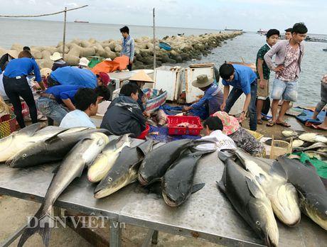 Quang Ngai: Nu Bi thu huyen dich than ra tay 'giai cuu' ca bop - Anh 3