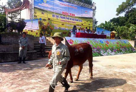 Bo me, be con cung len... san khau trinh dien - Anh 1