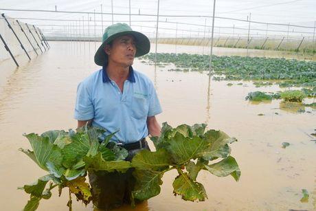 Nong dan Viet 'khoc rong' vi that thu do mua lu - Anh 1