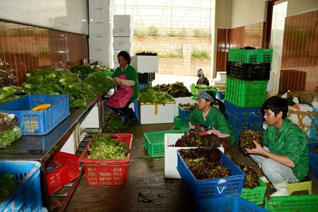 Nong dan Viet 'khoc rong' vi that thu do mua lu - Anh 4