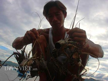 Nong dan Viet 'khoc rong' vi that thu do mua lu - Anh 5