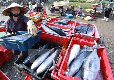 PTT Truong Hoa Binh chi dao giai quyet 5.369 tan hai san ton kho - Anh 1