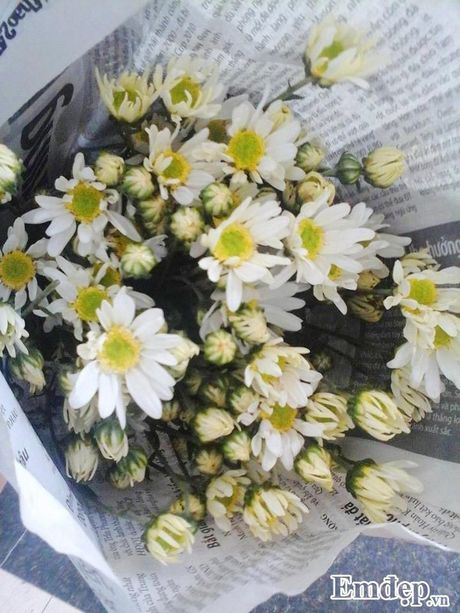 Cuc hoa mi 'goi dong' ve tren pho - Anh 8