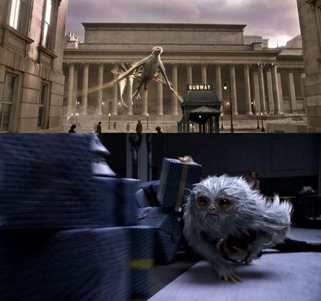 Fan Harry Potter phat sot vi clip hau truong 'Fantastic Beasts' nhieu bi an - Anh 3