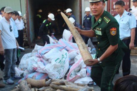 Tieu huy tren 2 tan nga voi, 70 kg sung te giac tai Ha Noi - Anh 1