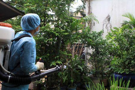 TP Ho Chi Minh: 24 phuong, xa co nguoi nhiem vi rut Zika - Anh 1