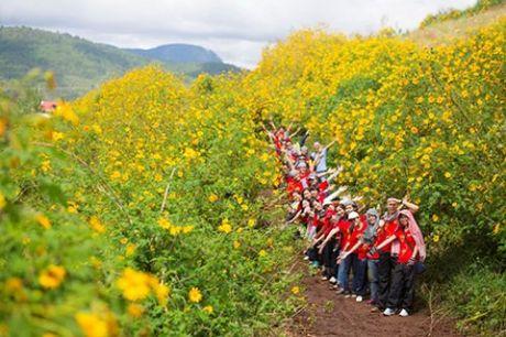Khong phai chi Da Lat ma Ha Noi cung ruc ro hoa da quy - Anh 2