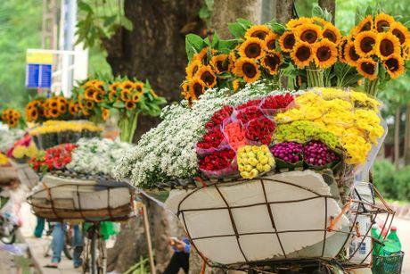 Ha Noi dep nao long mua hoa cuc hoa mi - Anh 1