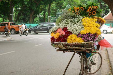 Ha Noi dep nao long mua hoa cuc hoa mi - Anh 2