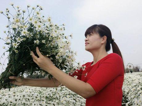 Ha Noi dep nao long mua hoa cuc hoa mi - Anh 3