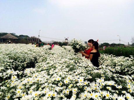 Ha Noi dep nao long mua hoa cuc hoa mi - Anh 4