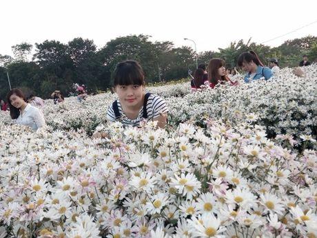 Ha Noi dep nao long mua hoa cuc hoa mi - Anh 6