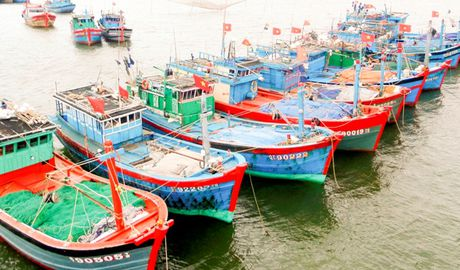 Quang Tri cap hon 114 ty dong boi thuong thiet hai do su co moi truong bien - Anh 1