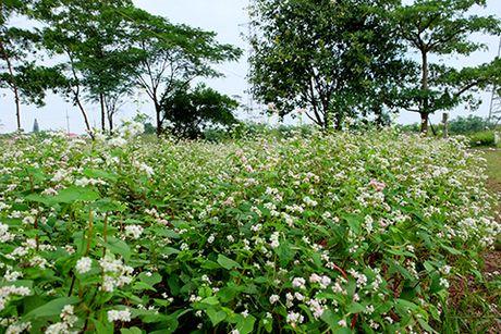 Sung sot: Nguoi dan ong trong vuon hoa TAM GIAC MACH giua Ha Noi - Anh 1