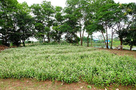 Sung sot: Nguoi dan ong trong vuon hoa TAM GIAC MACH giua Ha Noi - Anh 4