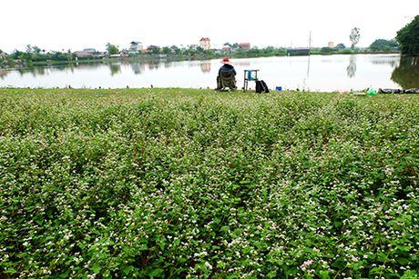 Sung sot: Nguoi dan ong trong vuon hoa TAM GIAC MACH giua Ha Noi - Anh 5