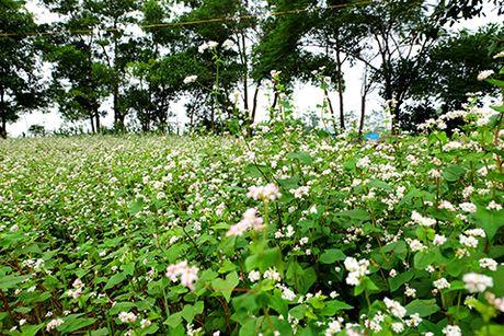 Sung sot: Nguoi dan ong trong vuon hoa TAM GIAC MACH giua Ha Noi - Anh 6