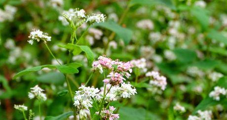 Sung sot: Nguoi dan ong trong vuon hoa TAM GIAC MACH giua Ha Noi - Anh 7
