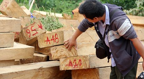 Vu pha rung po mu Quang Nam: Dang lam ro lien quan den dai uy Le Xuan Chinh - Anh 1