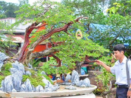 Nhieu bonsai la tu cho phien sinh vat canh - Anh 1
