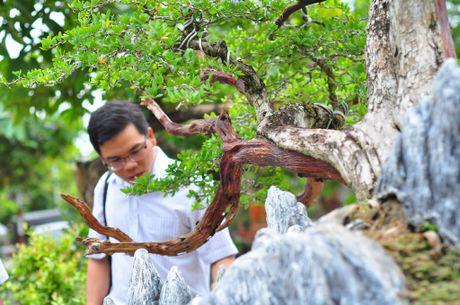 Nhieu bonsai la tu cho phien sinh vat canh - Anh 2