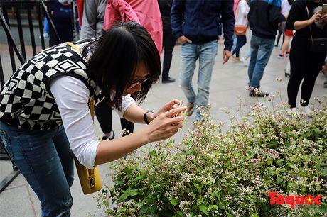 Ngam hoa tam giac mach lan dau khoe sac tren pho di bo - Anh 7