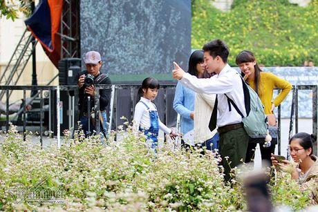 Selfie ben rung hoa tam giac mach giua Ha Noi - Anh 10