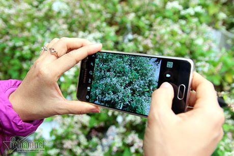 Selfie ben rung hoa tam giac mach giua Ha Noi - Anh 13