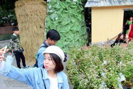 Selfie ben rung hoa tam giac mach giua Ha Noi - Anh 5