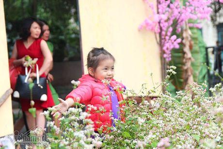 Selfie ben rung hoa tam giac mach giua Ha Noi - Anh 8
