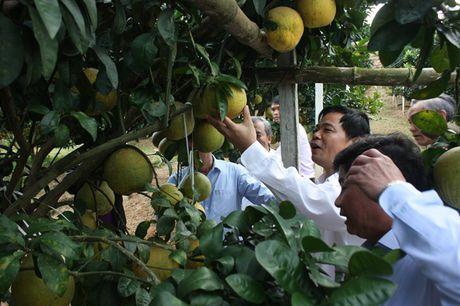 Bo truong Bo NN-PTNT Nguyen Xuan Cuong tham 'Vua buoi xu Muong' - Anh 2