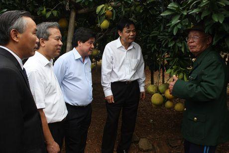Bo truong Bo NN-PTNT Nguyen Xuan Cuong tham 'Vua buoi xu Muong' - Anh 6