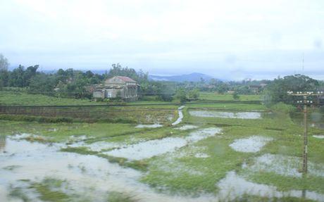 Quang Binh: Mua lu lam hu hong hon 4.200 ha cay trong - Anh 1