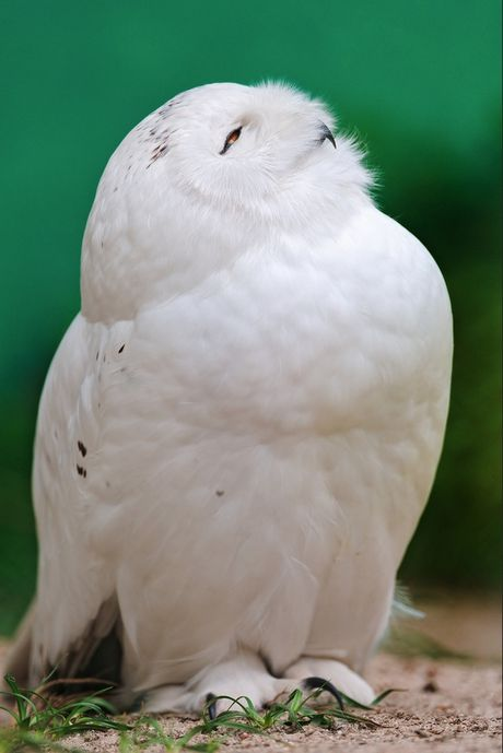 Bo 'icon' chim cu meo khien ban khong nhin duoc cuoi - Anh 14