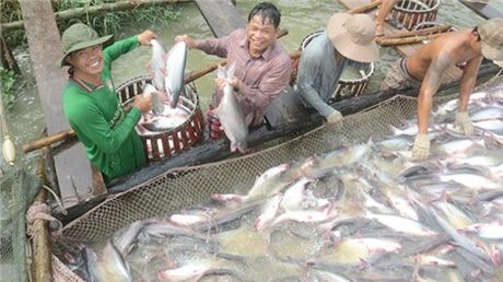 Thuong lai Trung Quoc lam loan gia ca tra - Anh 1